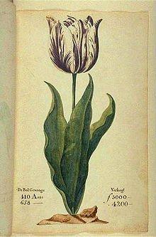 Tulip_mania