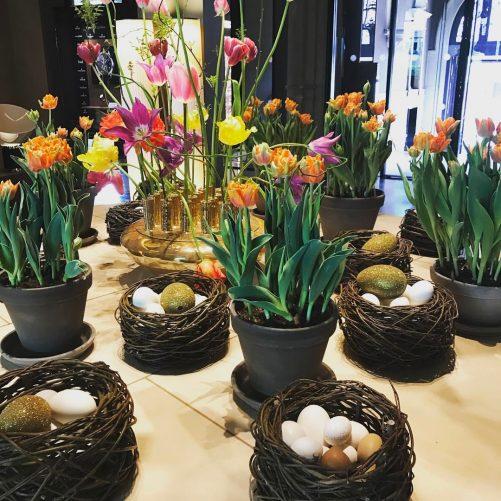 Tulips amsterdam